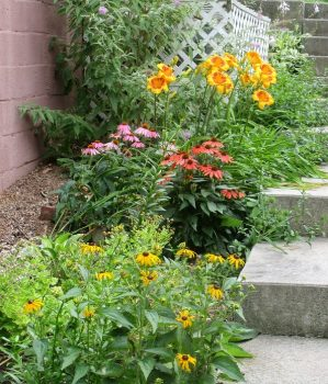 Black-Eyed Susan's, Day-Lilies, Coneflowers