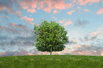 Living green -- nature-sky-twilight-grass