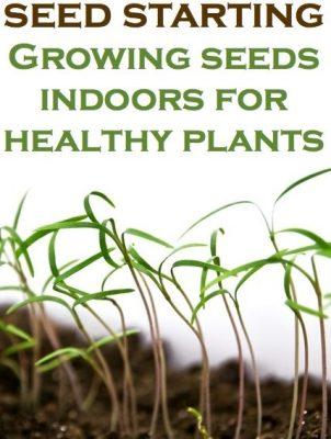 Seed-Starting-Growing-Seeds-Indoor 2
