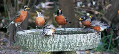 Attract birds your backyard