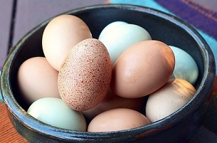 eggs frugal protein choice