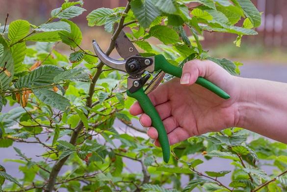garden tools pruner