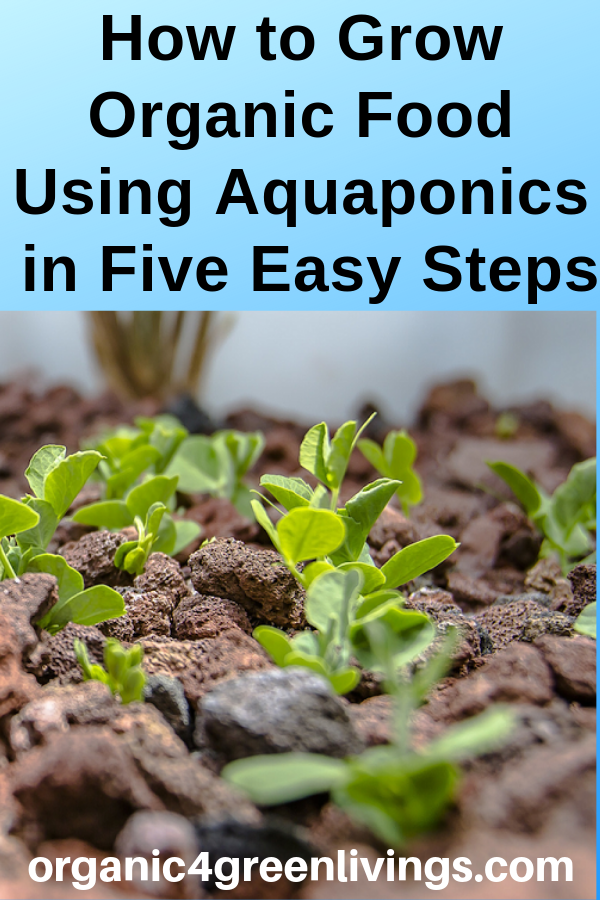 Grow Organic with Aquaponics