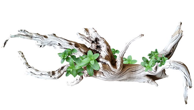 driftwood eco-friendly materials to decorate your home