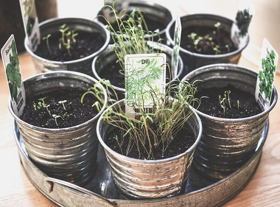 growing herbs indoors for winter usage
