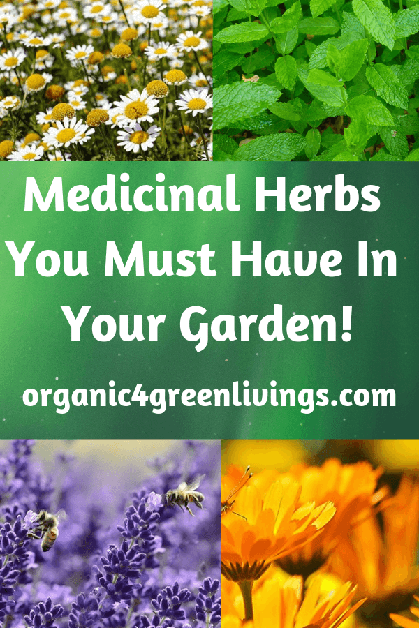 Medicinal Herbs for your garden