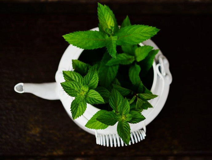Peppermint - Medicinal Herb