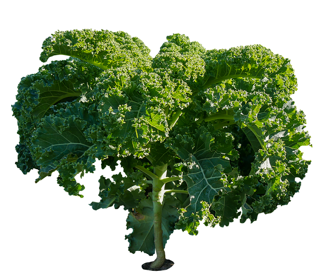 Kale - Home remedy for weigh loss