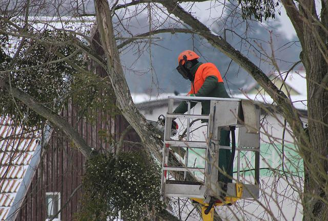 tips for choosing the best tree service