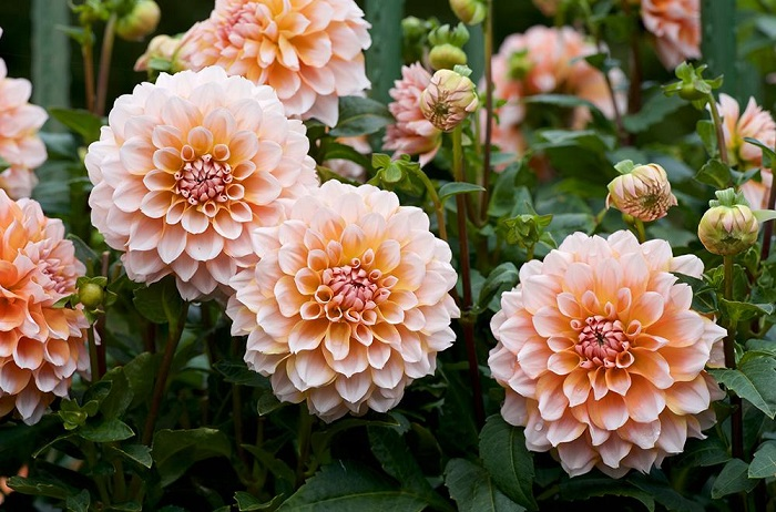 best flowers for your garden