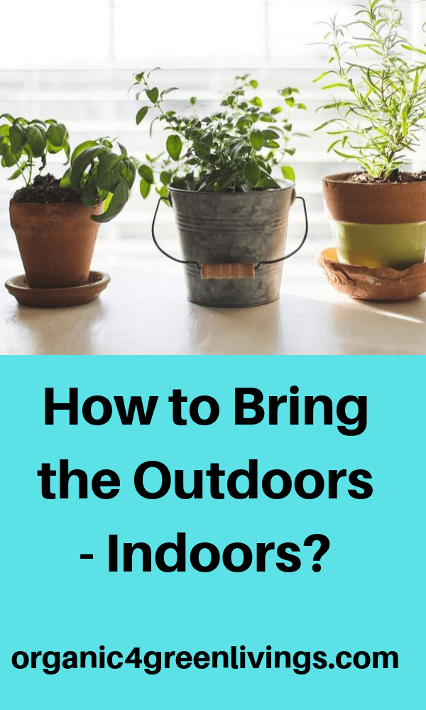 how to bring nature indoors