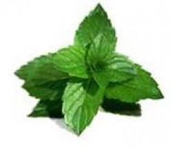 """Health Benefits of Mint"""