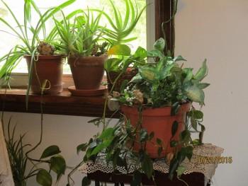 Air purifier plants that clean the air naturlly
