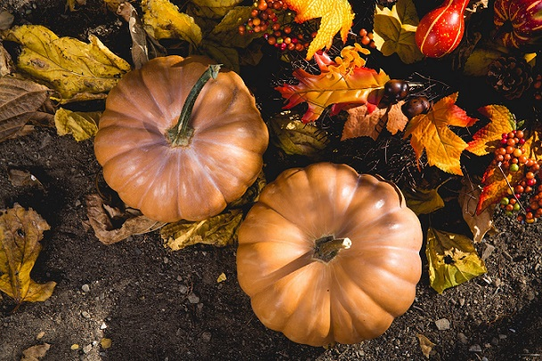 tips for preparing garden for Fall