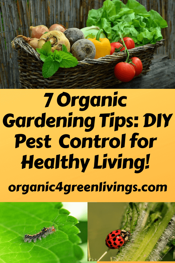 Organic gardening tips and DIY pest control