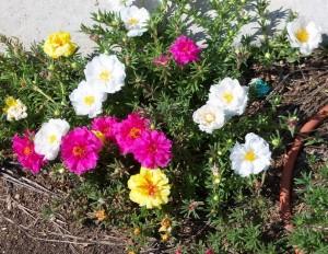 My organic flowers