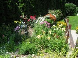 My organic flower garden
