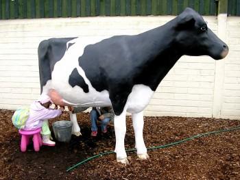 """Cow for Organic Milk"""