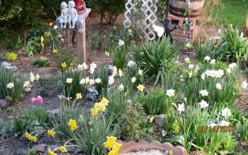 Spring garden Organic Grown