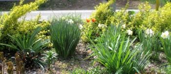 Organic Spring Flowers - tulips