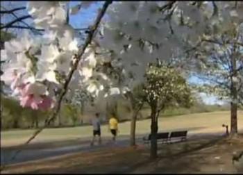 Natural Springtime allergies relief