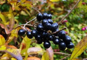 Foods for eye health - berries