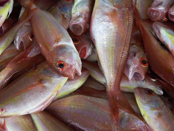 Foods for eye health fish