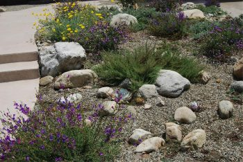 Native xeriscaping - green updates landscaping
