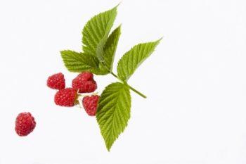 Herbal remedy - Raspberry leaf