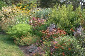 Green your yard plant a garden