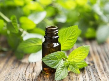 Peppermint-oil-mint-leaves