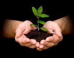 Greener Yard - plant a tree