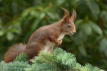 Pest in your garden -squirrel