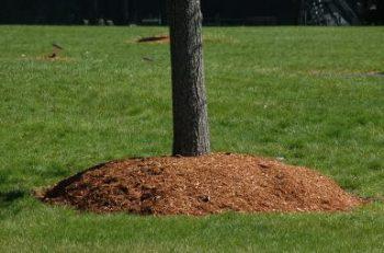 Greener yard on a budget -use mulch
