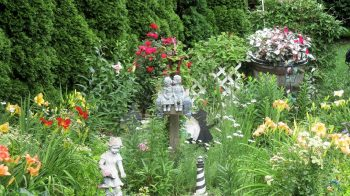 My Organic Garden, Roses, Inpatients, Day-Lilies