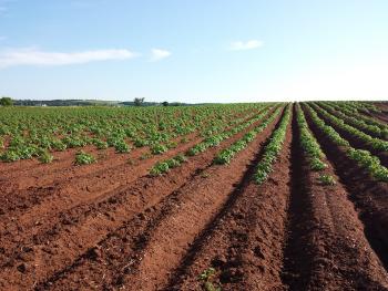 Farmers organic crops