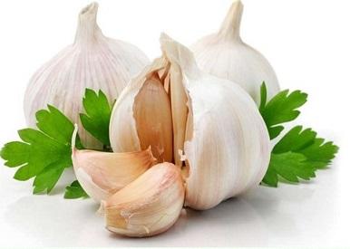 garlic-1
