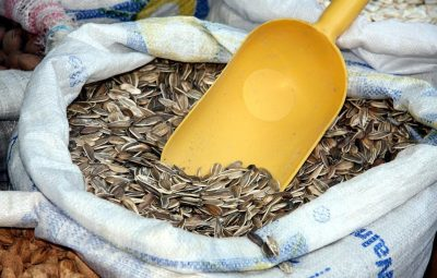 storing your sunflower seeds