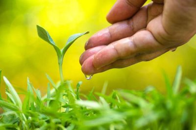Tips on saving water in your garden