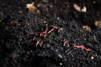 worms in soil