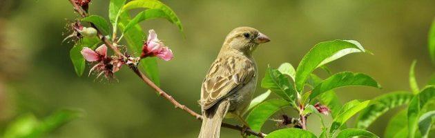 bird in flowering tree