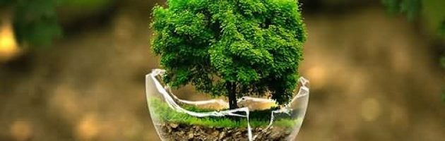 arti-lingkungan-hidup