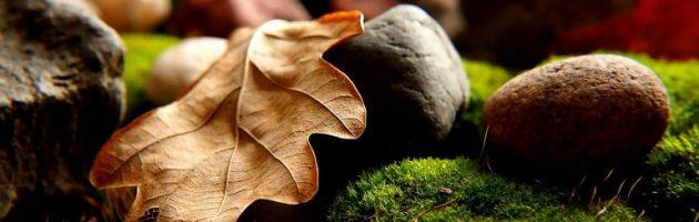 leaves, rocks grass for mulch