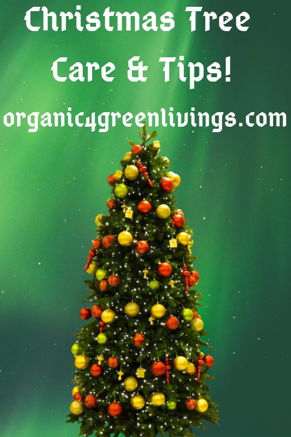 Christmas Tree Care