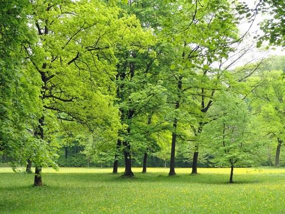 trees-park-outside