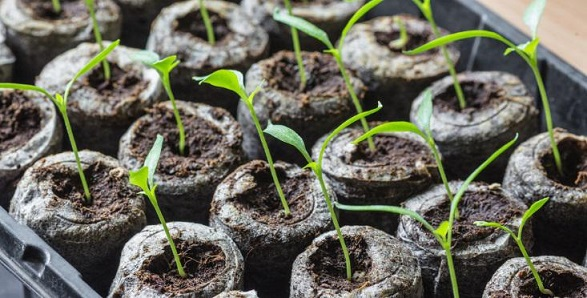 how to grow seedlings inside