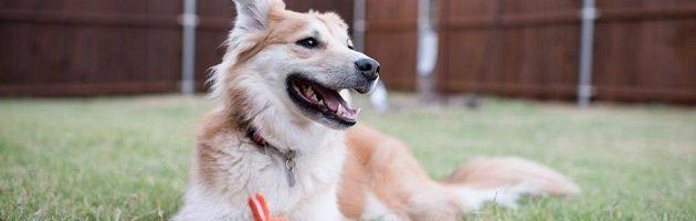 tips for pet friendly backyard
