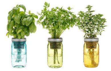 herbal indoor gardening