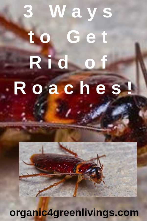 Roaches - Ways to Prevent and Get Rid of Roaches