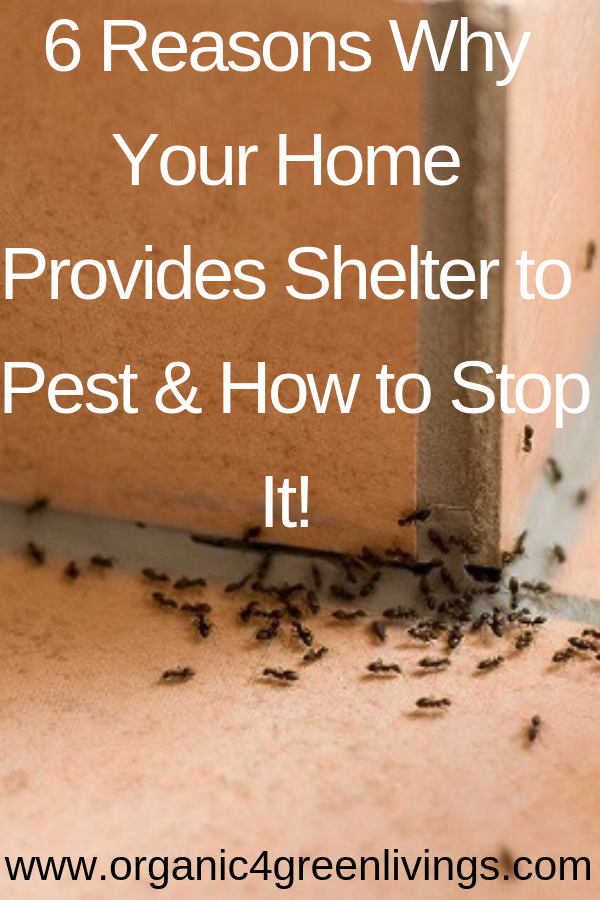 reasons why you have pests in your home